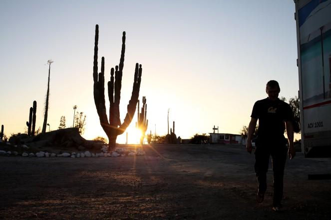 Cacti at sunset.