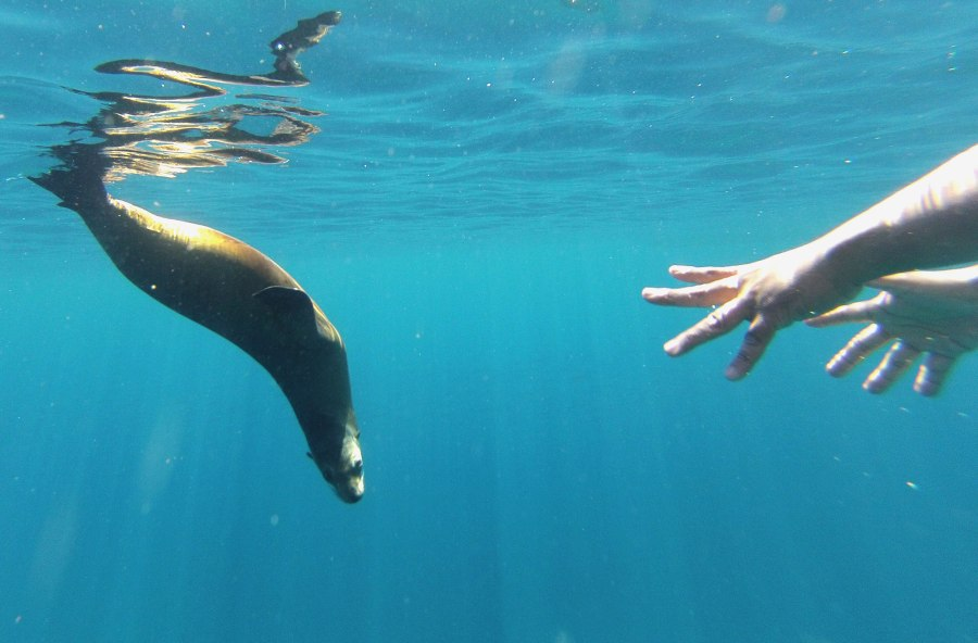 A tourist reaches out to touch a sea lion in the waters surrounding Isla Partida off the coast of La Paz Mexico. (Photo: Nathaniel Chaney)