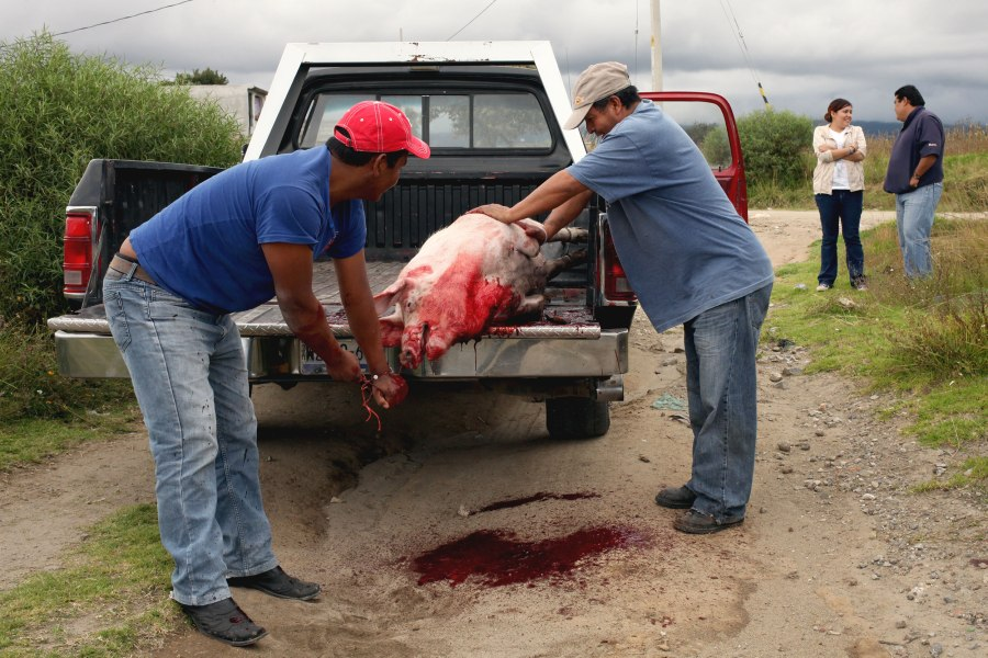 To disturb the neighbors as little as possible the butchers decided to kill the pig in a field a few blocks from the house. Photo: Alex Washburn