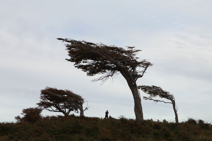 Trees that have been blown by the constant winds out on the plains of Ushuaia. Photo: Alex Washburn
